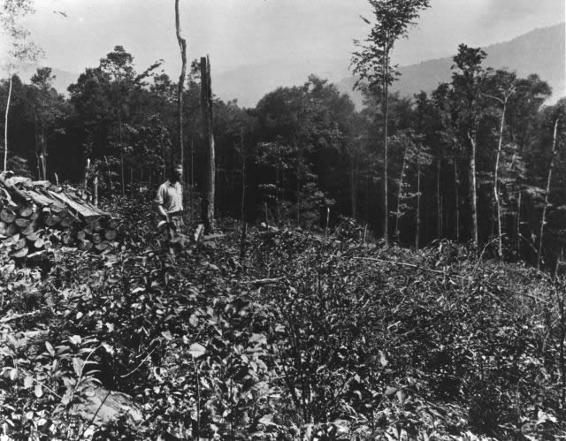 Vintage photo of clearcut area in the Allegheny National Forest