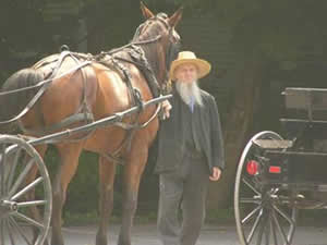 Man with Horse and Buggy