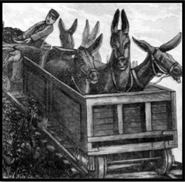 Drawing of mules riding in a coal car