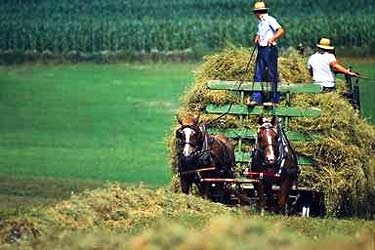 Amish Farm Cart